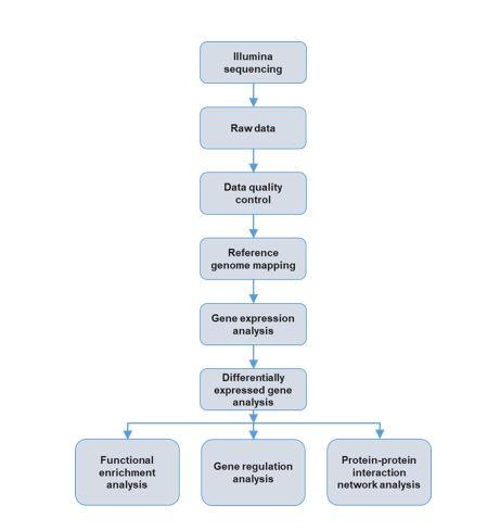 Analysis Pipeline mRNA-seq Diagram