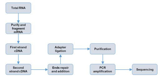 Service Workflow Diagram