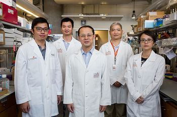 Photo of Wenliang Li, Ph.D., research team. PHOTO CREDIT: Maricruz Kwon, UTHealth.