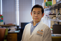 Researchers have discovered a potential new antibody therapy for COVID-19. (Photo by UTHealth)