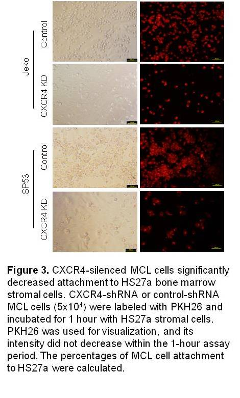 CXCR4-silenced MCL cells