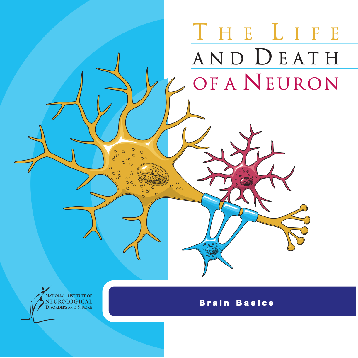 The Life and Death of a Neuron